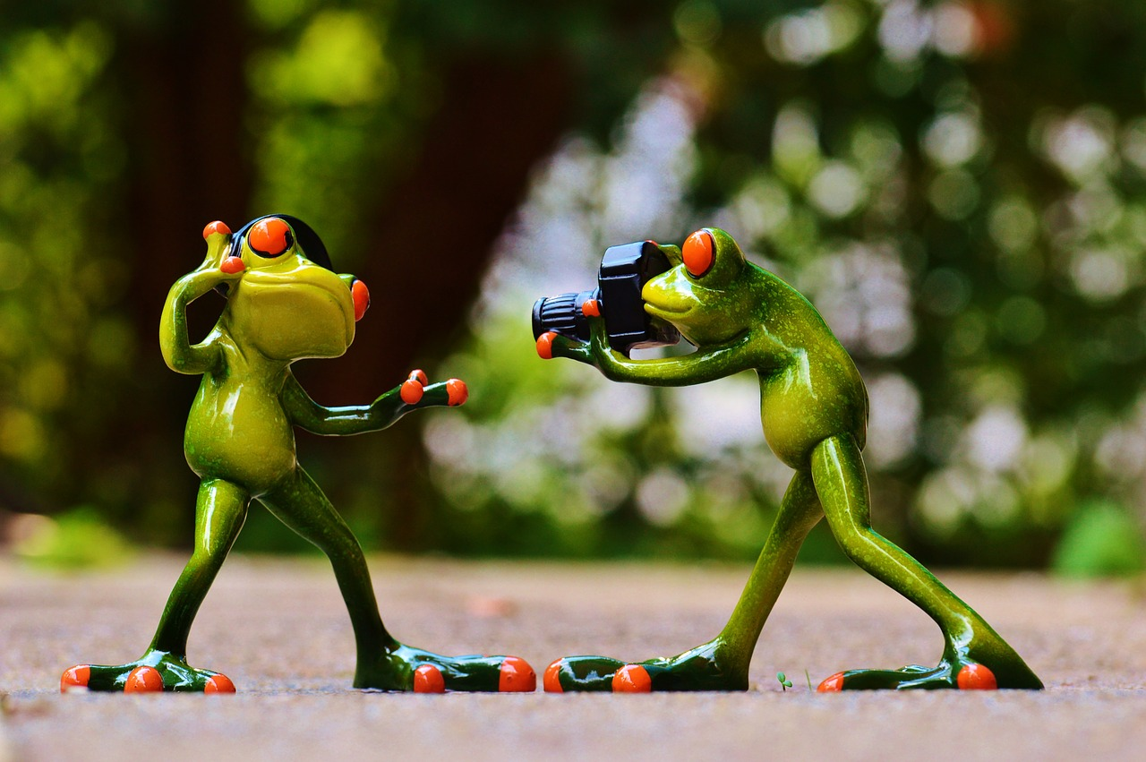 Frogs enjoying their time in summer